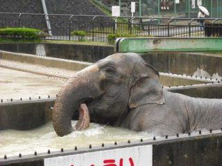 象のふじ子