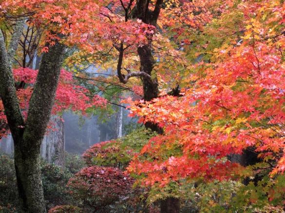 大井平公園紅葉