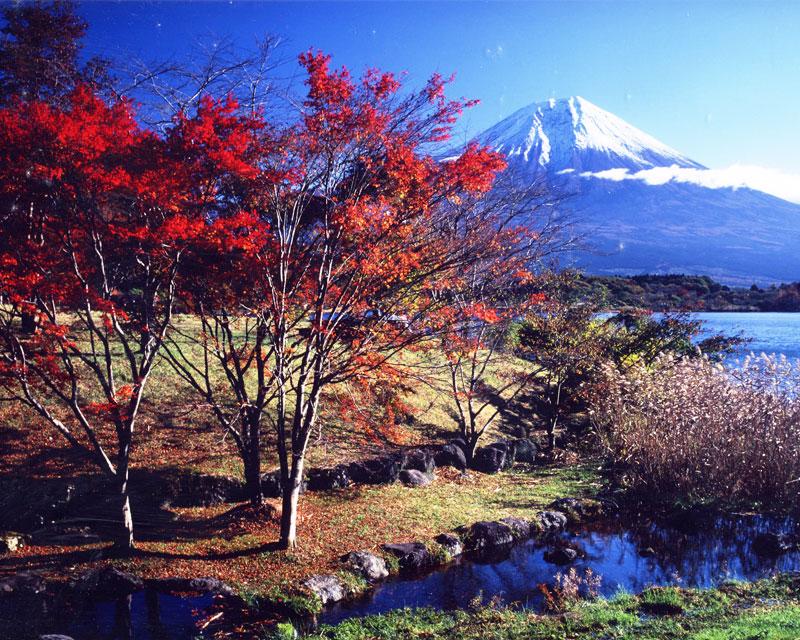 田貫湖 紅葉