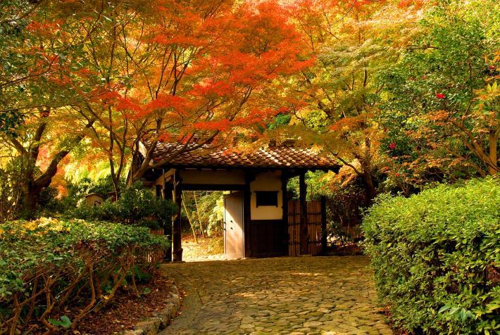 浜松城公園紅葉