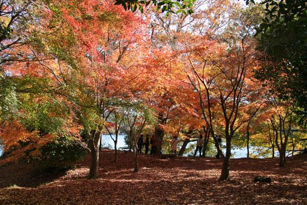 一碧湖紅葉