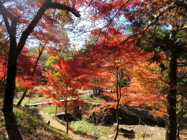 タカドヤ湿地紅葉