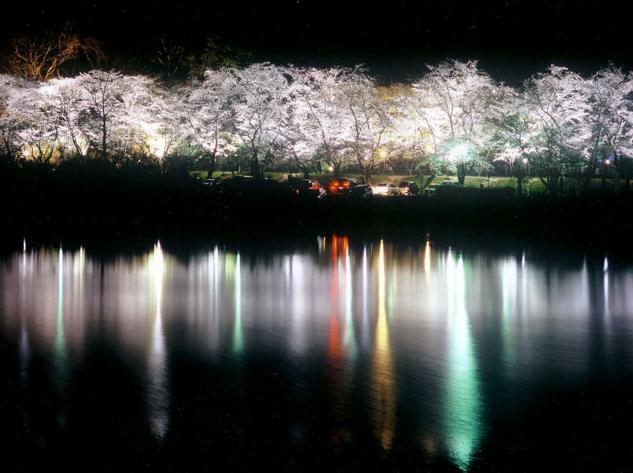 水源公園夜桜