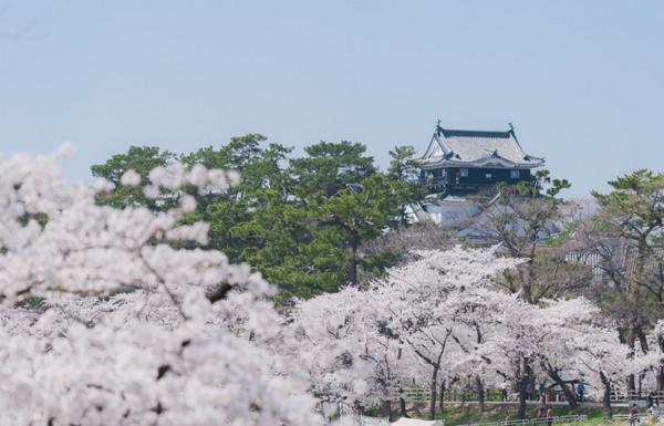 桜まつり岡崎