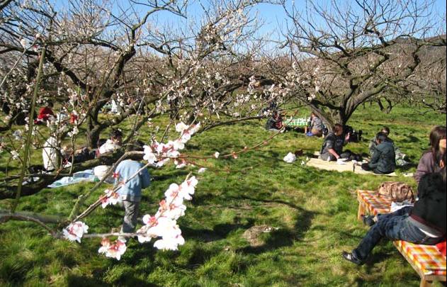 梅の花の下でお弁当