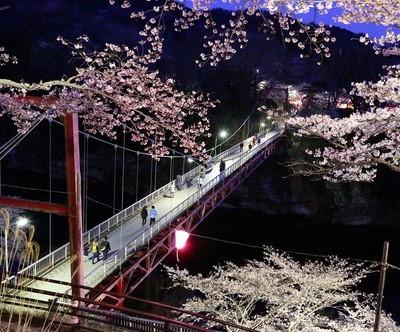 桜淵公園夜桜