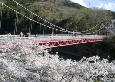 桜淵公園の桜2