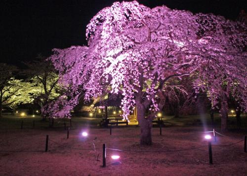 さくらの里夜桜