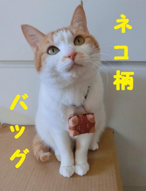猫バッグトップ